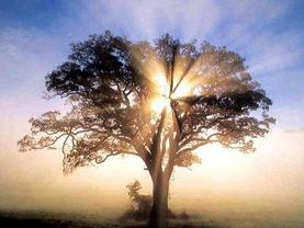 missio dei - the nature of god, picture of a tree