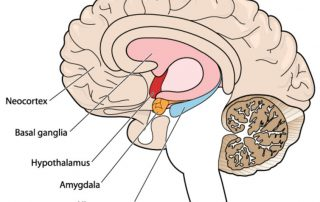 3-2-1-Go to sleep! Here's Why...diagram of the brain