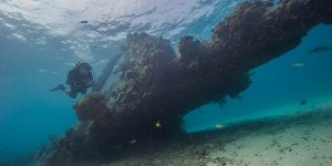 Diver Exploring Ship Wreck Dry Tortugas Challenge the National Parks Hike