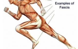 Fascia Facts